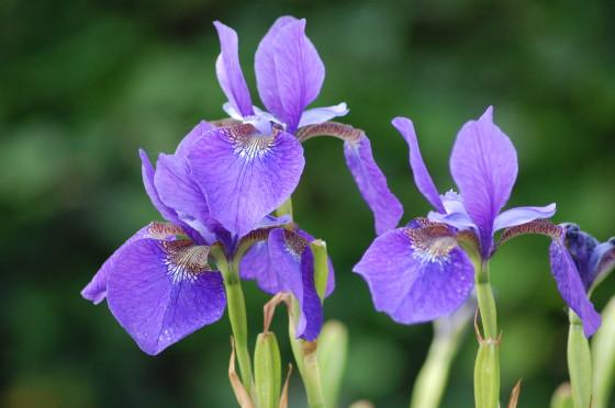 Giardino dell 39 iris di firenze guided florence tours - Giardino dell iris firenze ...
